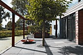 Tree planted in forecourt paved with grey stone flags in front of building entrance in summery surroundings