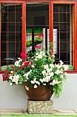 White and red flowering plants in pot on stone plinth below mahogany window