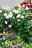 Blühende Blumen am Haus