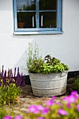 Herbs in zinc container against exterior wall