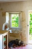 Australian Shepherd in front of kitchen window opening in historical masonry (Chateau Maignaut)