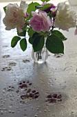 Abdrücke von Katzenpfoten im Betonestrich und Glasvase mit Schnittrosen auf dem Boden