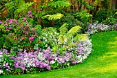 Small, purple-flowering perennial plants as edging of curved flower bed