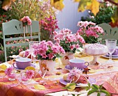 A table laid for coffee decorated with pink chrysanthemums
