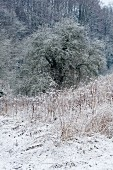 Wintery hoarfrost in woodland clearing