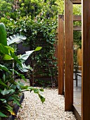 Gravel garden path between wooden terrace with pergola and bed of palm trees