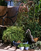 Chinese silver grass (Miscanthus), Thalia dealbata, Cyperus albostriatus and baby panda bamboo (Pogonatherum paniceum) next to chair on balcony