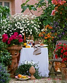 Tuscan atmosphere on a balcony: geraniums, ox-eye daisies, marmalade bush (Streptosolen), blue rock bindweed (Convolvulus), terracotta pots and cherubs