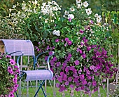 Flowering petunias next to chair on balcony
