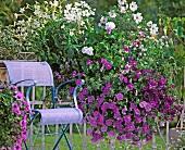 Flowering petunias next to chair on balcony