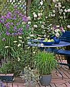 Gartenterrasse mit Kletterrosen und Schwertlilien