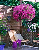 Bright purple hanging basket on balcony with wooden balustrade