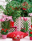 Blooming balcony with glorious flowers in shades from red to pink