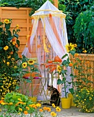 Small tea table under mosquito net and sunflowers on balcony