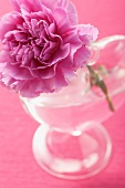 Vase mit pinker Pfingstrose