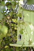 Pastel green bird box hanging in tree