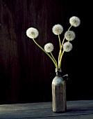 Dandelion clocks in vase on wooden table