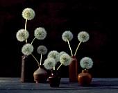 Dandelion clocks in various vases