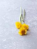 Three dandelion flowers