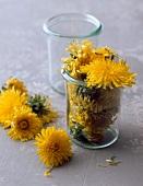 Dandelion flowers, some in jar