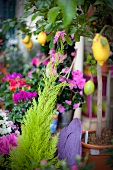 False cypress, cyclamen and lemon tree