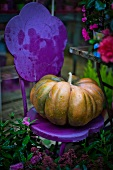 Musque de Provence pumpkin on purple garden chair
