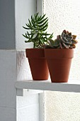 Succulents in two plant pots on white shelf in front of bathroom window