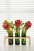 Protea flowers in recycled wine bottles converted into vases
