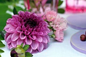 Lilac dahlias decorating table