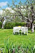 Weiß lackierte Gartenmöbel unter dem Apfelbaum