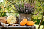 Small ornamental gourds and potted heather (alpine heather) on rustic table outside