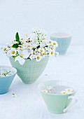 Daisies, apple blossom and sweet woodruff flowers in ceramic bowl