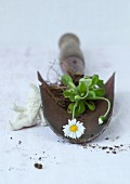 Dug-up daisy plant with roots on trowel next to gnome ornament