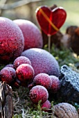Red baubles covered with hoarfrost in wintery garden arrangement of dried lemons, cinnamon, fir cones, walnuts and moss with red glass heart