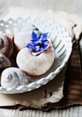 Snails' shells and borage flowers in china dish