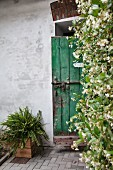 Climber-covered wall next to house entrance with rustic, green wooden door