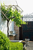 Rusty iron gate with pretty wrought iron trellis in foreground