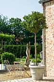Small tree in terracotta vase against brick wall; stone statue on plinth and vintage garden furniture in background
