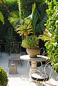 Foliage plants and collection of antique garden furniture in gravel courtyard