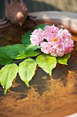 Branch of pink flowers in birdbath filled with water