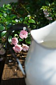 Partially visible vintage metal jug in front of flowering rosebush