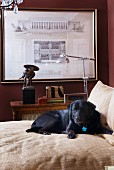 Black Labrador on bed before retro floor lamp and framed architectural drawing on dark red wall