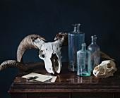 Animal skulls and vintage bottles on cabinet against black background