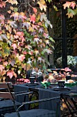 Set table in garden in front of wall covered in autumnal vine leaves