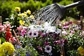 Watering a flowerbed in the garden