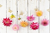 Various dahlias and paper butterflies hanging on a white-painted wooden wall