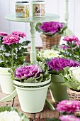 Chrysanthemums and ornamental cabbages in plant pots arranged around side table on terrace