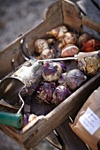 Various garden tools and plant bulbs on wooden tray and in paper bags