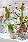 Arrangements of amaryllis and hyacinth bulbs with twigs of rosehips