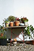 Potted plants on garden table against house facade